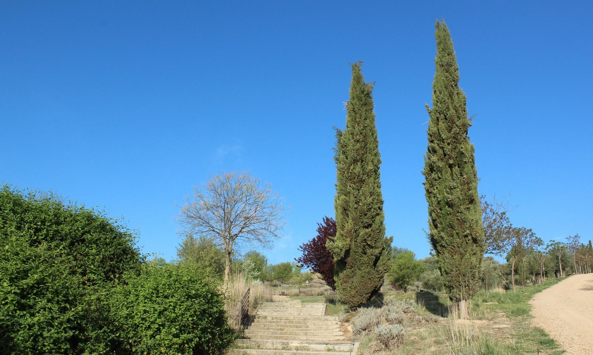 árboles: ciprés